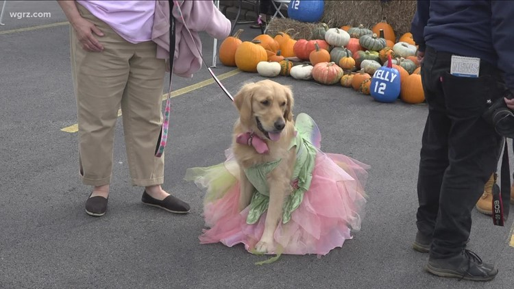 Niagara SPCA holds fall festival to help dogs get adopted