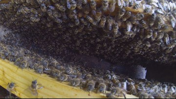 The Benefits Of Beekeeping