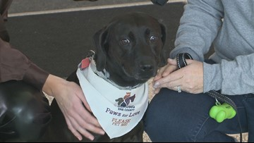 Therapy dogs ready to comfort travelers during busy weekend at the airport