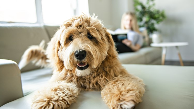 More developers add pet-friendly amenities to apartment projects