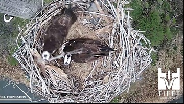 2 the Outdoors: Osprey on the waterfront