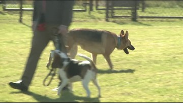 Niagara Falls Opens First Dog Park