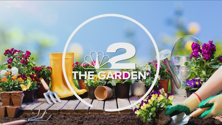2 the Garden: Bringing Your Lawn Back to Life