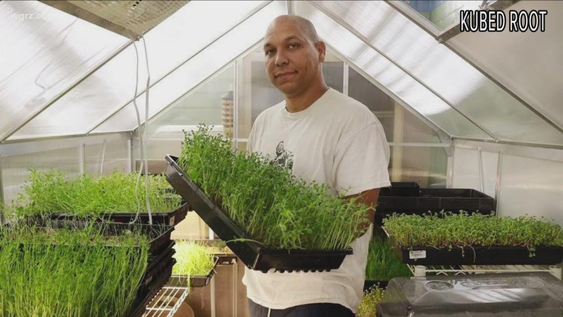 Kubed Root micro greenery in Buffalo