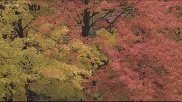 Fall Foliage Peaking