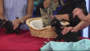 Adoptable animals brought together with Cause for the Paws Pet Expo