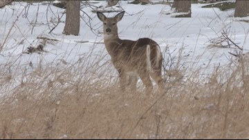 Regular season for hunting deer, bears begins in Western New York
