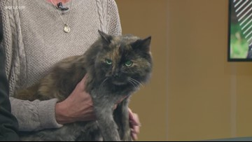 Pet of the Week: Fluffy
