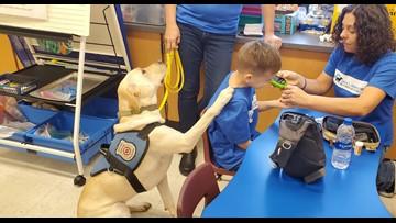 Diabetes alert dog will improve Cheektowaga boy's life