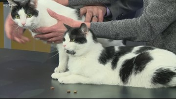 Pet of the Week: Marshmallow and Bitsy