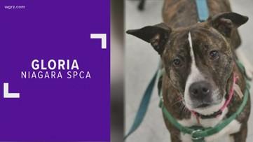 Pet of the Week: Gloria