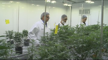 Canada's First Cannabis College Program