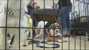 Western New York adoption agencies stage 'furtastic' event