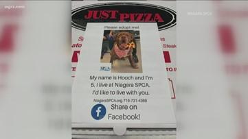 Niagara SPCA expands adoption awareness with T-shirts, hoodies