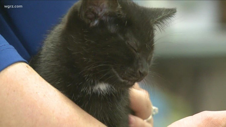 SPCA of Erie County holding half-priced adoptions for cats