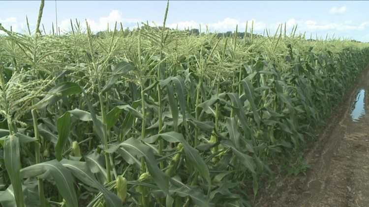 $4 million awarded to NYS farmers to address impacts of climate change