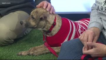 Pet of the Week: Jackson from Buffalo CARES