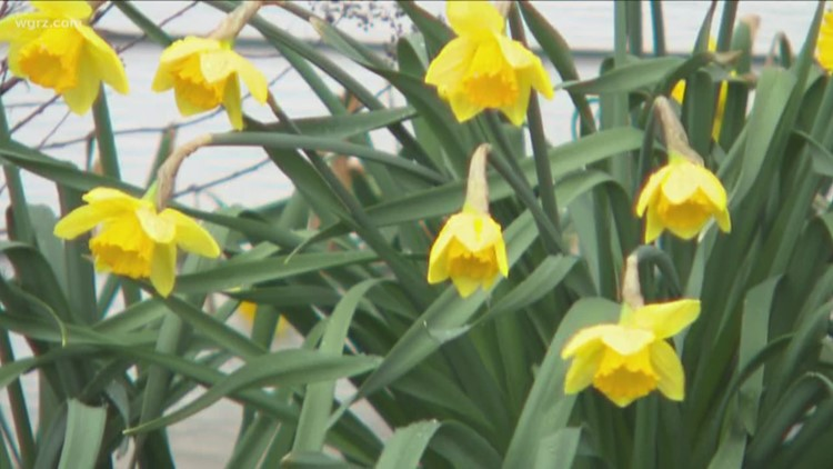 Signs of spring across Western New York