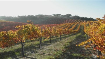 Kevin is joined by Kevin DiLucente to discuss Pinot Noir Regions
