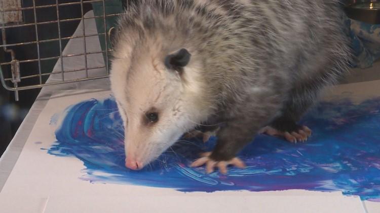 Painting Opossum