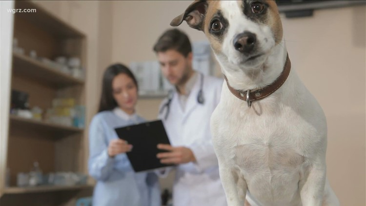 Veterinary Emergency Hospitals backed up due to COVID