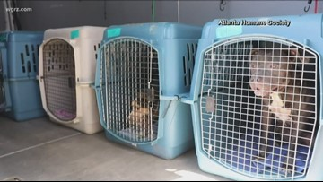 Erie County SPCA takes in South Carolina rescue dogs
