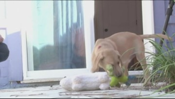 Pet Store Puppies May Be Spreading Illness