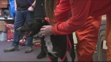 Pet program benefits animals and holding center inmates