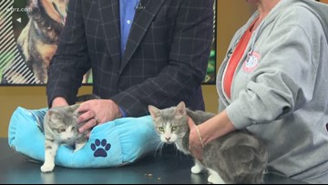 Pets of the Week: Catelyn and Sam