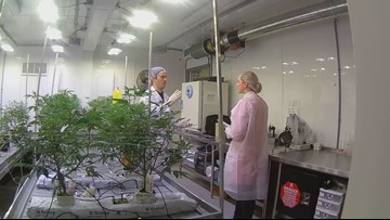 Students talk about why they want to learn the trade of growing cannabis