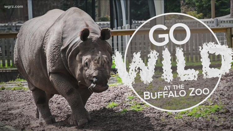 Go Wild: Different species of rhinos at the Buffalo Zoo