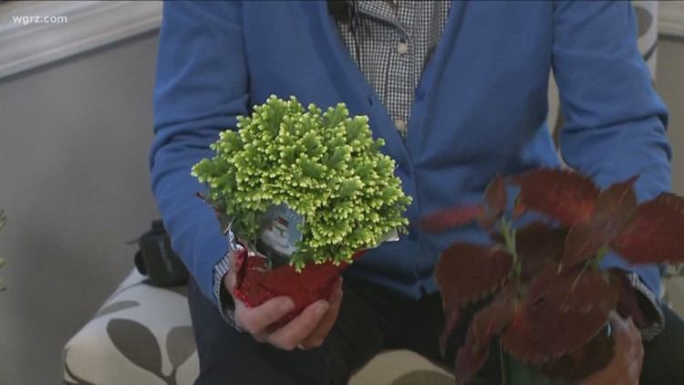 2 the Garden: Holiday Plants to Give as Gifts