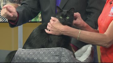 Pet of the Week: Vanessa the cat