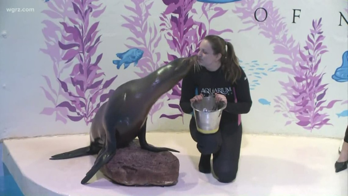 Aquarium of Niagara offering discounted admission over the weekend